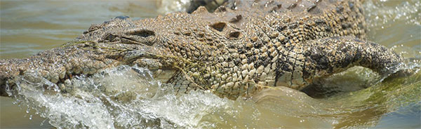 Visit Koorana Crocodile Farm